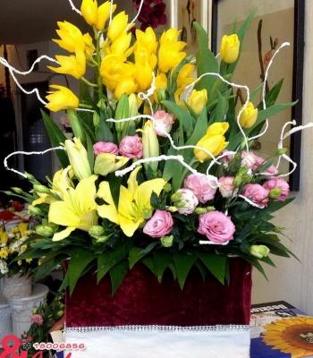 Hộp hoa Địa lan vàng – Kiêu hãnh