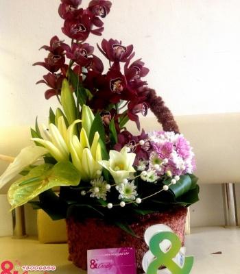 giỏ hoa địa lan tím