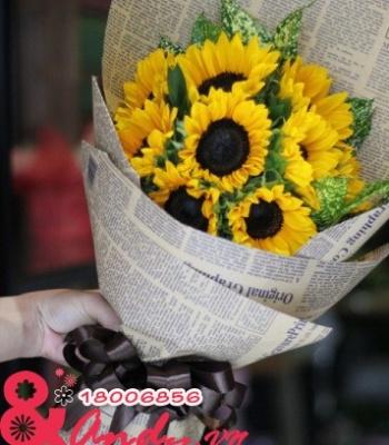 Hoa hướng dương bó với giấy báo