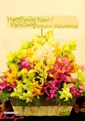 Giỏ hoa Lan – Sắc màu hoa Lan