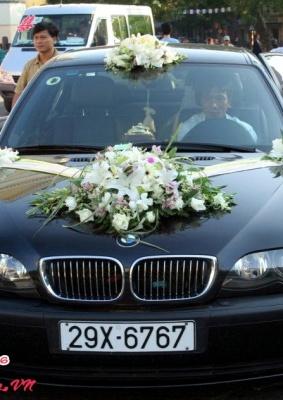 Hoa cưới 93538