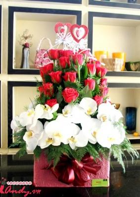 Hộp hoa Lan Hồng