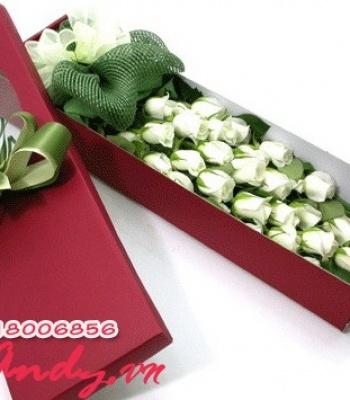 Hộp hoa hồng trắng – Dịu dàng