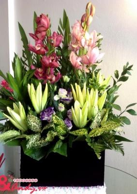 Hộp hoa địa lan cao cấp