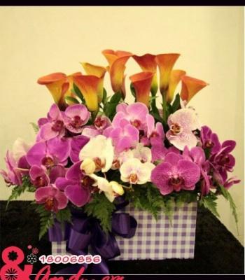Hộp hoa Hồ Điệp Tím