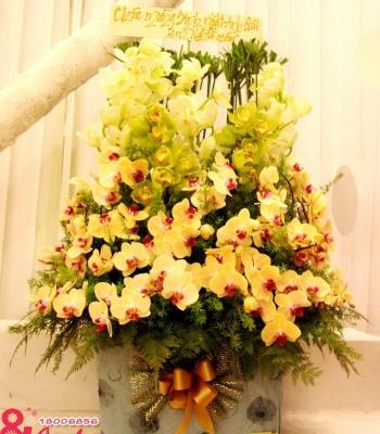 Hộp hoa lan cao cấp