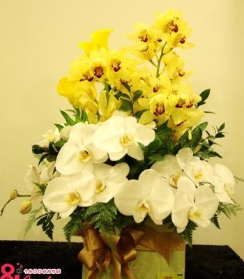 Hộp hoa lan đẹp – sang trọng