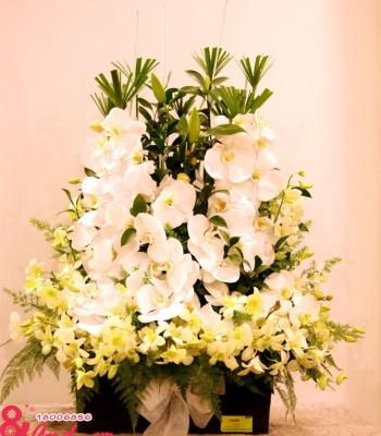 Hộp hoa lan hồ điệp