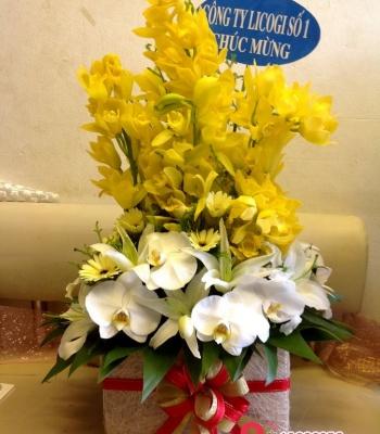 Hộp hoa song lan