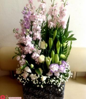 Hộp hoa phi yến