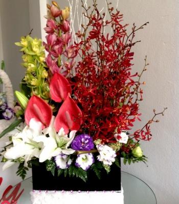Hộp hoa Lan bò cạp