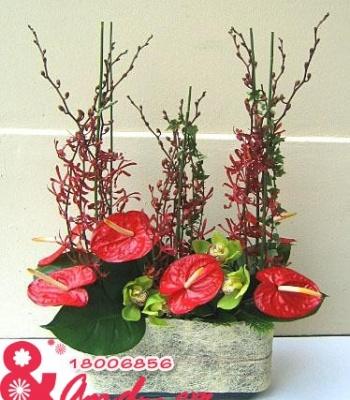 Sắc đỏ lan peru và hồng môn